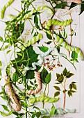 Süssigkeiten in Raupenform auf Pflanzenzeichnung als Wanddeko