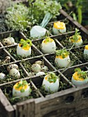 Stuffed eggs with truffle oil