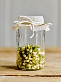 Bean sprouts in a sprouting jar