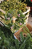 Advent wreath of fir branches on crate of mistletoe
