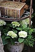 weiße Hortensie auf Metallregal mit antikem Buch
