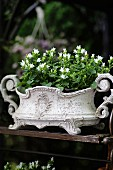 White campanula planted in Art Nouveau planter