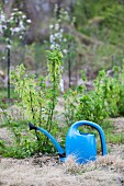 A watering can in a garden