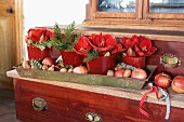 Red pots of amaryllis flowers, nuts and apples in metal tray