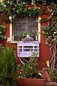 Ornate, lilac birdcage below rose climbing on red façade