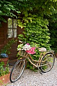Vintage bicycle with flowers in basket on gravel path leading to front door surrounded by climbers