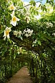 weiße Blüten an Rosenbögen über einem Kiesweg