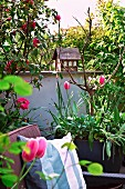 Cushions on armchair and pink tulips in planters on spring roof terrace