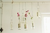Sprigs of red campion in bottles hanging from pipe