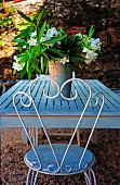 Metal chair in front of white-flowering oleander on garden table