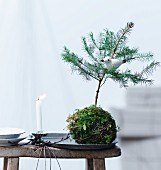 Bird ornament in small fir tree in moss ball next to lit candle