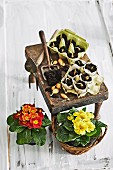Eierkartons & Zylinder aus Zeitungspapier als Pflanzgefässe für Setzlinge