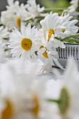 Ox-eye daisies on table outdoors
