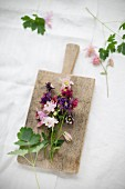 Aquilegias of different colours on small wooden board