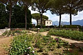 Landscaped garden in Mediterranean surroundings with palazzo (Villa Cimbrone) in background