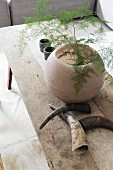 Asparagus fern (Asparagus setaceus) in spherical vase next to animal horns on rustic wooden table