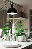 Industrial lamp above small fir tree on washstand