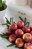 White dish of red apples and fir branches
