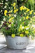 Mit Frühlingsblumen bepflanzte Zinkwanne