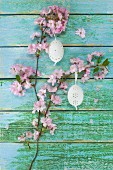 Easter eggs hanging from branch of cherry blossom against wooden background