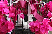 White doves in cage decorated with bougainvillea for wedding celebration