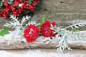 Rote Rosenblüten mit Greiskraut (Senecio bicolor) und Kunstschnee auf einem Ast