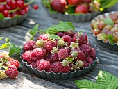 Freshly picked raspberries in flan tin