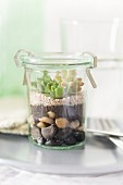Sempervivum and sedum on layers of soil and pebbles in terrarium made from preserving jar