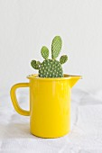 Opuntia cactus planted in old yellow enamel jug on white linen tablecloth