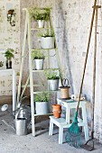 Plants in zinc pots on stepladder and gardening utensils in vintage interior