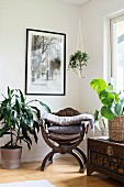 Stacked cushions on curule seat surrounded by house plants