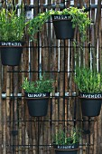 Herbs in black pots with hand-written labels mounted on screen