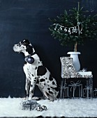 Dog with Christmas tree bauble hanging from collar sitting in room decorated in black and white