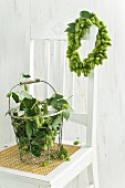 Wreath of hops hanging on chair backrest and wire basket of hops