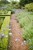 Kiesweg neben formgeschnittenen Hecken in blühendem Garten