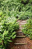 Gravel path with wooden steps in landscaped, natural garden