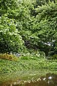Teich in eingewachsener Gartenanlage