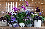 Arrangement of various potted plants flowering in shades of purple and pink