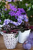 Pale purple African violets in ceramic pots, one spotted, and purple bird ornament
