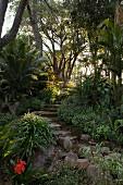 Steintreppe in tropischem Garten mit japanischem Sagopalmfarn (Cycas revoluta)