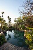 Angelegter Teich in subtropischem Garten umgeben von Felsen und Farn, Palmen im Hintergrund
