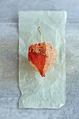 A dried Chinese lantern as a decoration