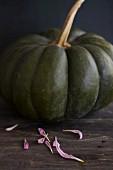 A dark-green Muscade de Provence pumpkin