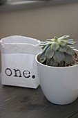 Succulent in white china pot next to printed paper bag