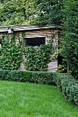 Low hedge in front of climber-covered garden shed with slatted wooden façade