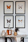 Candles and demijohn on animal skin below gallery of framed butterfly drawings