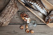 Stillleben mit gesammelten Naturmaterialien auf rustikaler Holzunterlage