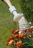 A watering can attachment for bottles for watering flowers