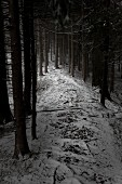 Snowy woodland path leading between bare spruce trunks