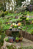 Potted plants on rustic table and flowering plants in terraced beds in garden